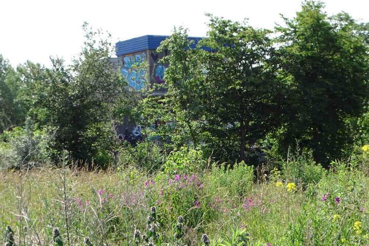 Der Wilhelm-Leuschner-Platz im Sommer - bisher ein Paradies für Insekten und Singvögel.