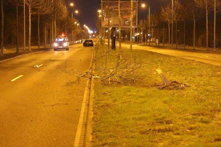 Diesen Baum hatte der betrunkene Ford-Fahrer umgesenst, die dahinter stehende Alina frontal erfasst und zu Boden geschleudert. Er blieb erst auf der Gegenspur stehen.