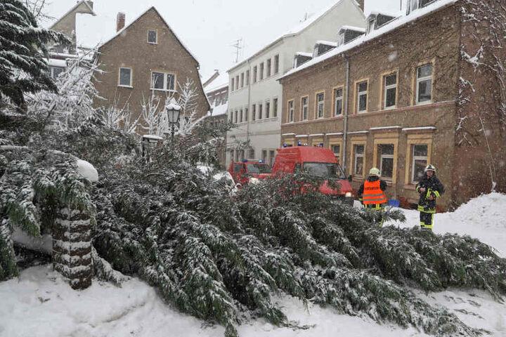 In Hohenstein-Ernstthal ist ein etwa zehn Meter hoher Baum abgebrochen.
