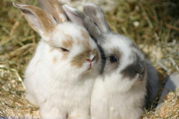 Das Tierheim verlangt für die Vermittlung von Tieren eine Gebühr. Dabei geht es nicht um den materiellen Wert.