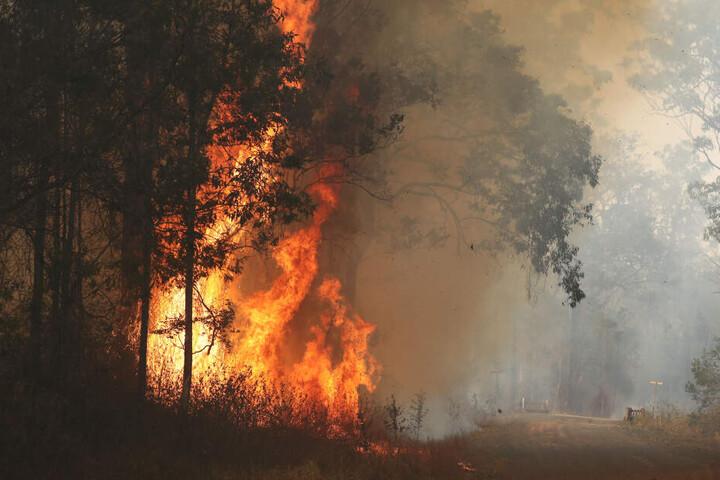 Das Buschfeuer wurde vermutlich durch einen Blitzeinschlag ausgelöst und ist noch nicht unter Kontrolle. (Symbolbild)