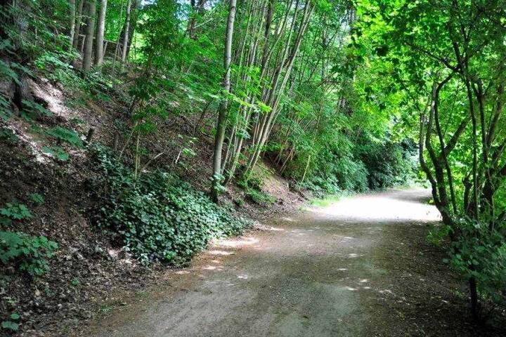 Auf diesem Weg im Stadtpark wurde die Joggerin Mitte Juli überfallen.