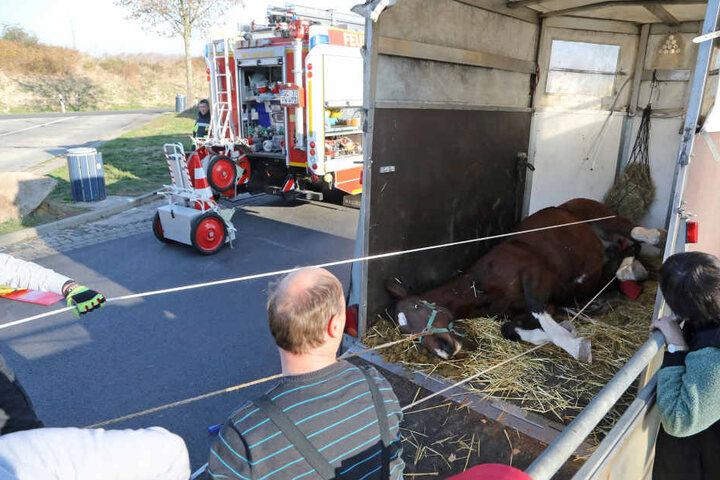 Das Pferd war im Hänger gestürzt und schaffte nicht wieder auf die Beine.
