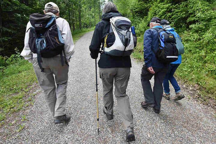 Die Wanderung durch den Märchenwald ist etwas für Jung und Alt.