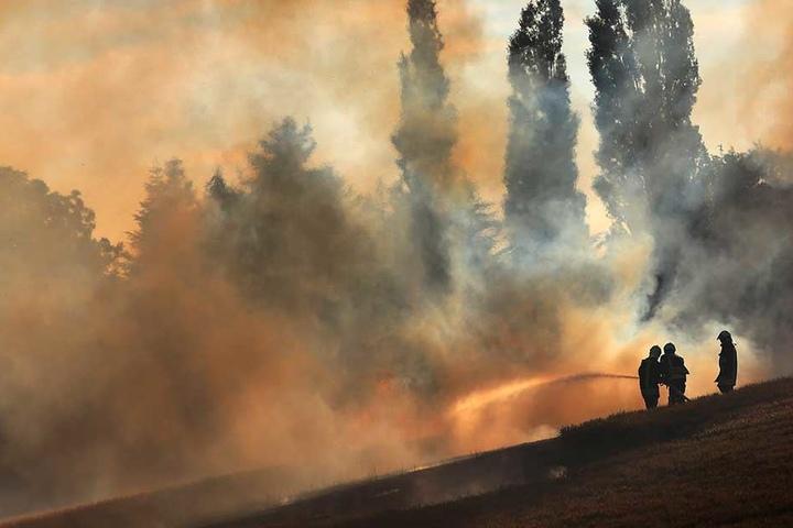 Das Feld brannte auf sieben Hektar nieder.