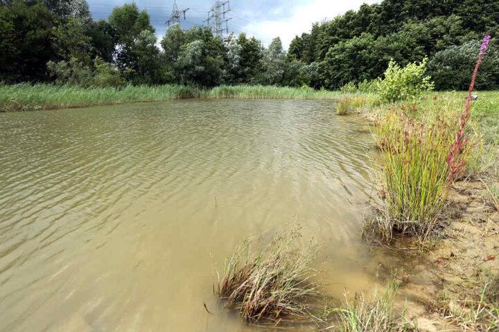 Der Kalikokrebs breitet sich immer weiter in unseren heimischen Gewässern aus (Symbolfoto).