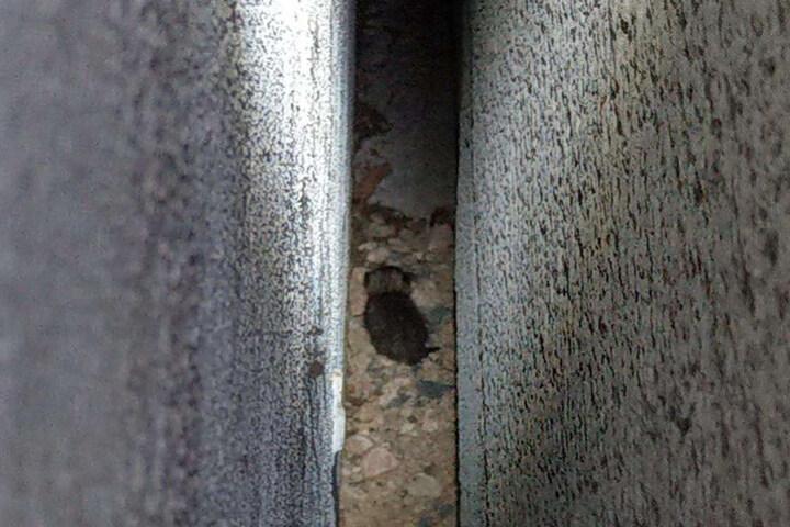 Missliche Lage: Die Katzen-Babys saßen in einem Spalt zwischen zwei Gebäuden fest.