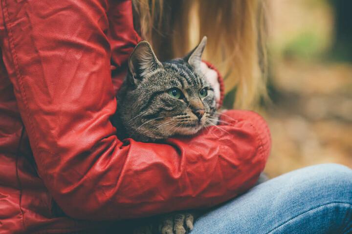 Ob sich das Tier vom grausamen Missbrauch erholen wird, bleibt unklar. (Symbolbild)