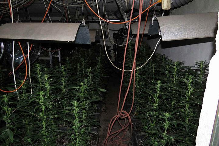 So sah es in einem der Kellerräume aus, in dem Cannabis getrocknet wurde.