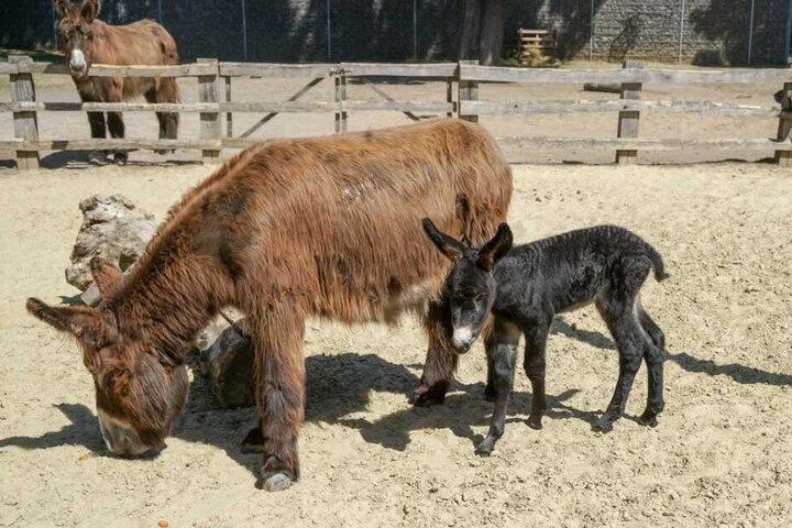 Nach der Geburt machte das Kleine die ersten Gehversuche.