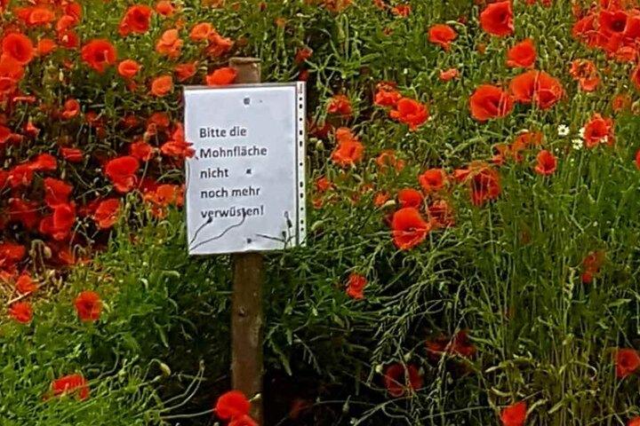 Das Schild am Rande des Mohnfeldes.