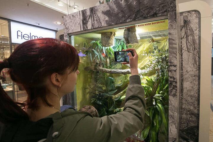 Die Ausstellung sorgt für Aufsehen. Diese Besucherin fotografiert ein Chamälion.