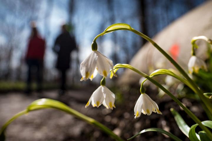 Wanderer kommen auch aus der Ferne, um die schönen Blumen zu bewundern.