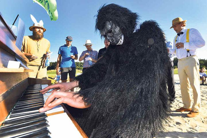 Im Sandloch spielt ein Gorilla am Klavier. Unter dem Kostüm schwitzt Künstler  Max Rademann.