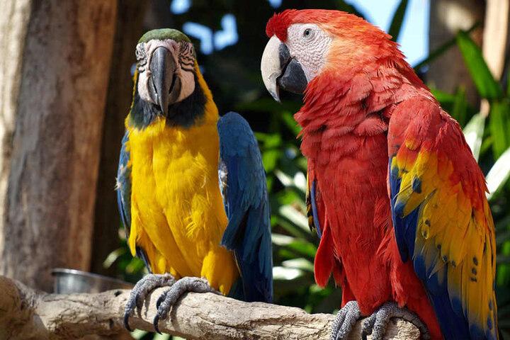 In der Vogelausstellung können Besucher nicht nur Papageien, sondern auch europäische und andere exotische Vögel bewundern.