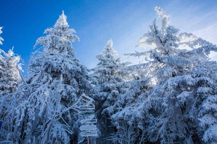 Die Chancen auf weiße Weihnachten stehen in Sachsen aktuell bei 30 Prozent.