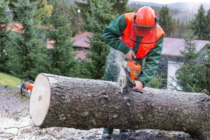 Die Feuerwehr zerlegte eine massive Fichte in Schnett (Landkreis Hildburghausen).