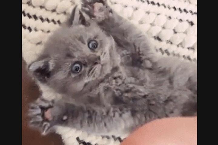 Vor allem Katzen-GIFs sind sehr beliebt.