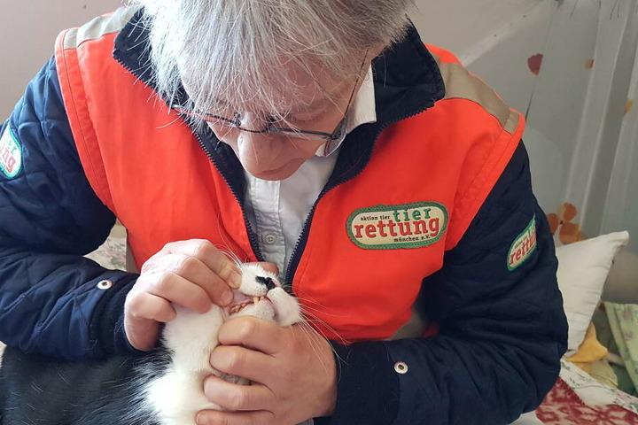 Dr. Gabor Horvath von der Tierrettung München inspiziert die Maulhöhle von Burli.
