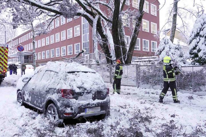 Auf der Heinrich- Beck- Strasse stürzte ein etwa 10 Meter langer Ast herunter und begrub ein Auto unter sich.