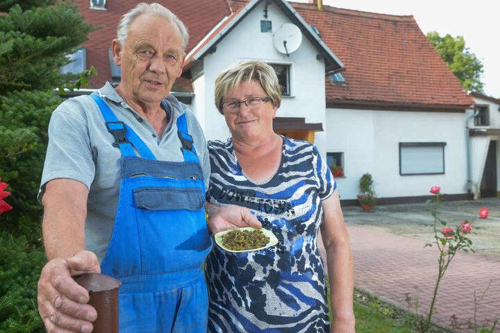 Hans-Günther (69) und Roswita Haller (67) vor ihrem Haus in Dürrhennersdorf. Auf dem Teller tote Wespen.