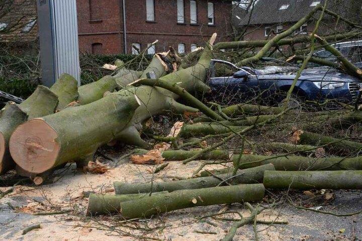 In Gütersloh wurden parkende Autos von Bäumen begraben.