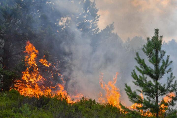 Wald- und Heideflächen brennen auf dem ehemaligen Truppenübungsplatz in Südbrandenburg. Die Flammen bahnen sich unaufhaltsam ihren Weg.