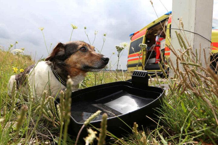 Ein Hund war sofort tot, ein andere wurde verletzt.