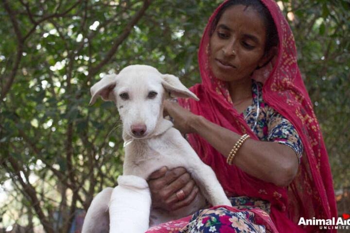 """Am Ende hatte es das Team von """"Animal Aid Unlimited"""" wieder geschafft. Der kleine Hund war versorgt und in Sicherheit."""