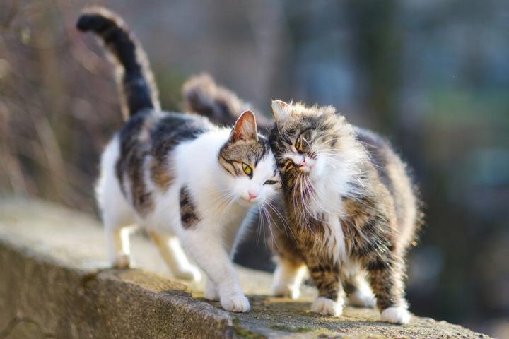 Von einer der beiden Hauskatzen soll Alexandra erstickt worden sein. (Symbolbild)