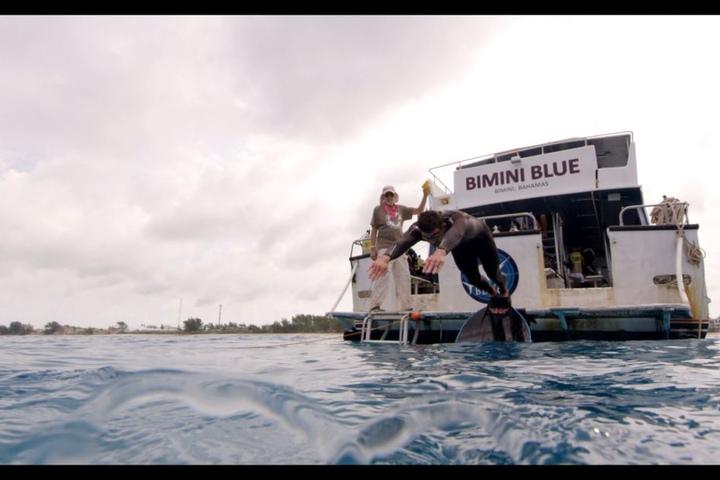 Phelps springt mit einer Flosse ins Wasser.