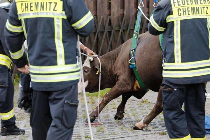 Mit einem Kran gelang den Rettungskräften letztendlich die Bergung des Tieres.