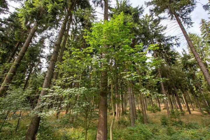 Die Landesregierung will mindestens fünf Prozent des Waldes dauerhaft aus der Nutzung nehmen.