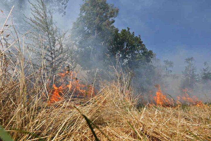 Die Flammen loderten auf einem Feld und an einer Straßenböschung.