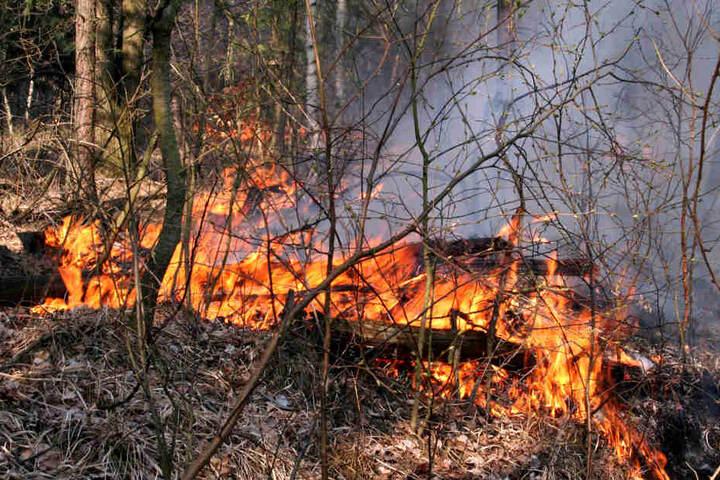 Das Spezialgebiet des Chemnitzers sind Waldbrände, ihre Entstehung und ihre  Folgen.