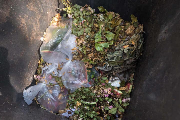 Chemnitzer Schmuddel-Müll: Auch Plastetüten liegen in der Biotonne.