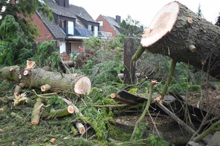 Selbst größere Bäume konnten der Naturgewalt nicht standhalten.
