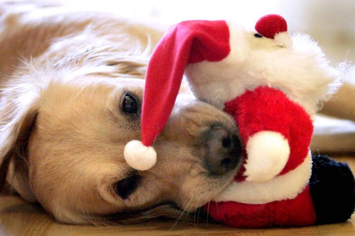 Natürlich haben auch Hunde ein Recht auf Weihnachten und entsprechende Geschenke.