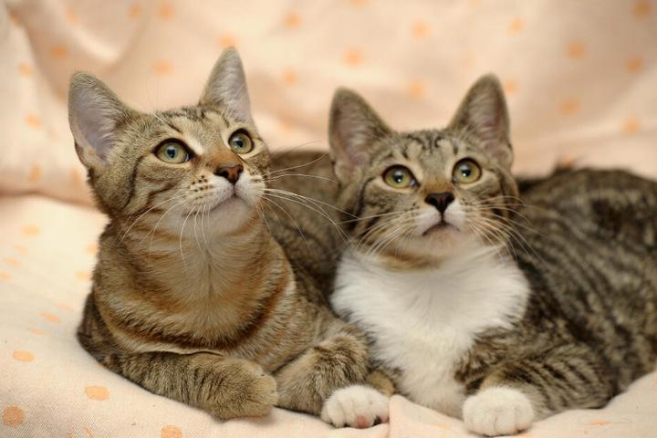 frau mit vielen katzen