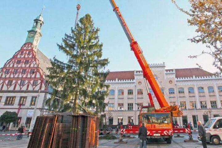 Dieser mickrige Baum machte 2015 die Zwickauer unglücklich.