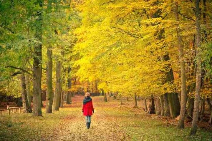 Am helllichten Tag wurde eine Spaziergängerin in Fürth vergewaltigt. (Symbolbild)
