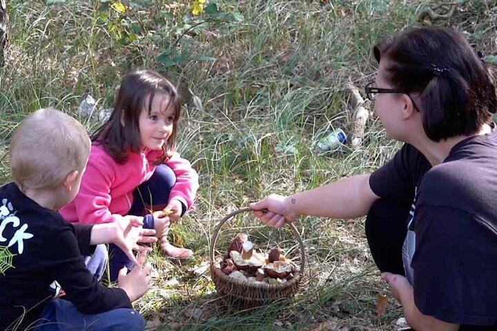 In den Wäldern der Colbitz-Letzlinger Heide suchten derweil Hunderte Menschen nach Pilzen.