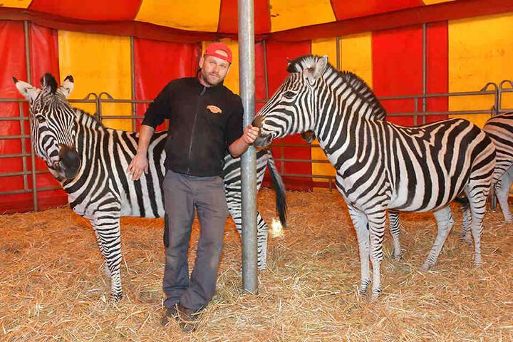 Trainer Jiri Berousek (48) und seine verbliebenen Zebras.