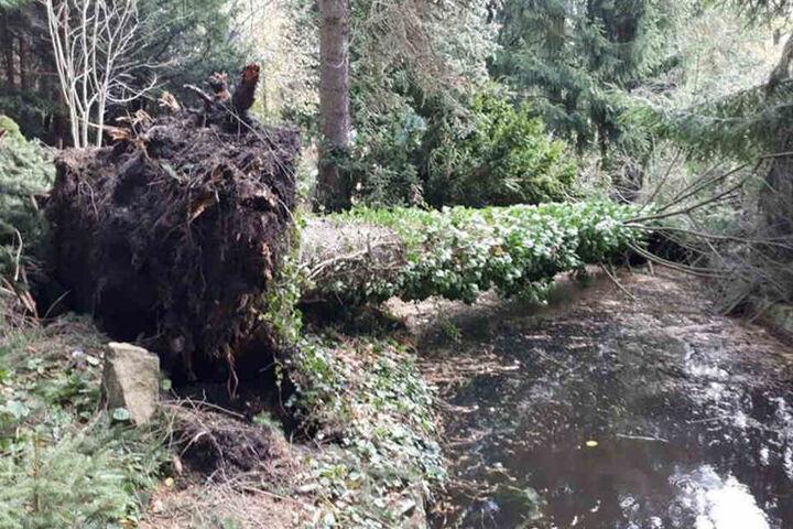 Bäume stürzten durch den Sturm um.
