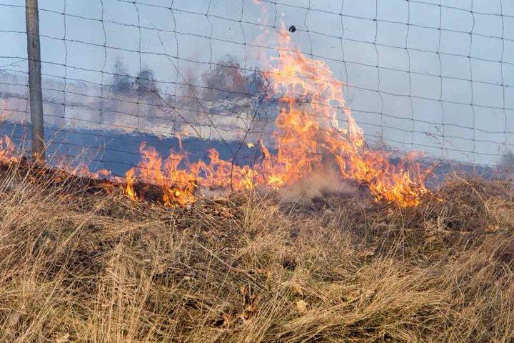 Etwa ein Hektar Feld ging in Flammen auf.
