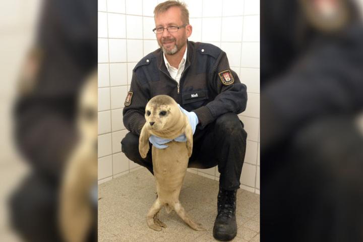 """Vor einem Jahr musste Olaf Nieß schon einmal ausrücken, um Seehund """"Stormy"""" zu retten. (Archivbild)"""