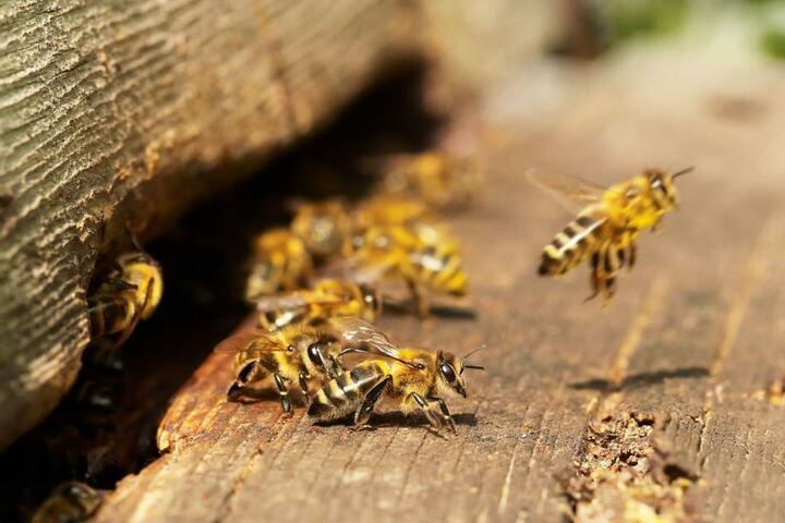 Die beheizbaren Waben sollen die schädlichen Varroamilben abgetötet werden.