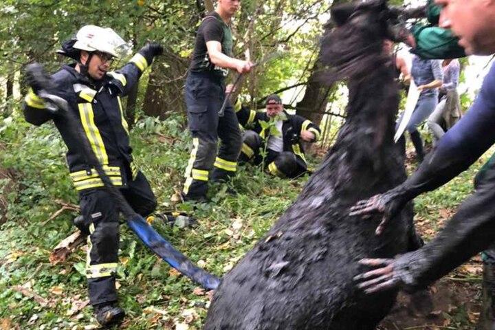 Mit vereinten Kräften befreite die Feuerwehr das Pony.