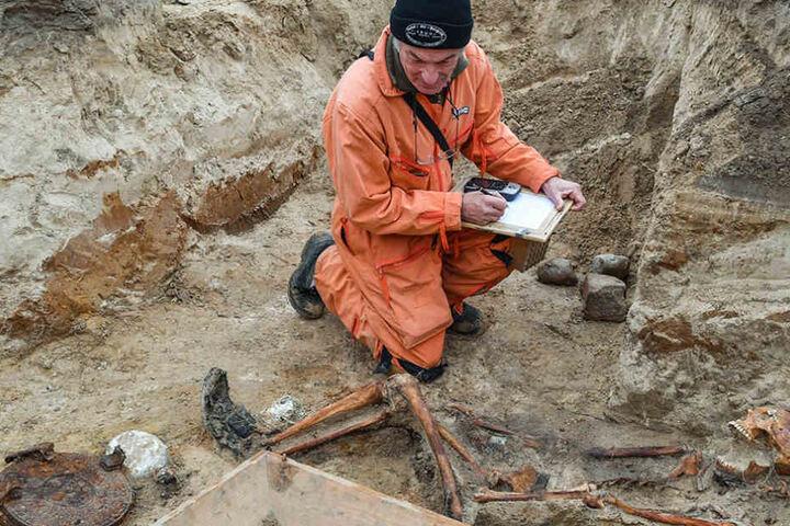 Grabungstechniker Werner Schulz vom Verein zur Bergung Gefallener in Osteuropa e.V. (VBGO) begutachtet die sterblichen Überreste eines sowjetischen Soldaten.