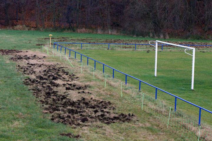 Wie heftig die Wildschweine vorigen Monat in Wernsdorf gewütet haben, ist am Rand des Spielfeldes noch immer sichtbar.